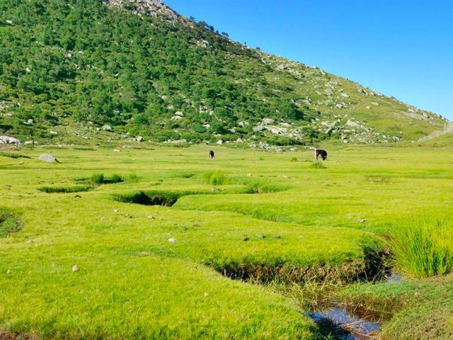 Le plateau du Coscionu, lieu de transhumance préservé et authentique